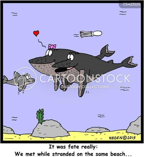 humpback cartoon