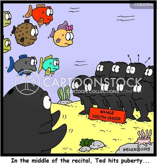 chorister cartoon