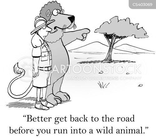wild lion cartoon