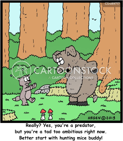 wild pigs cartoon