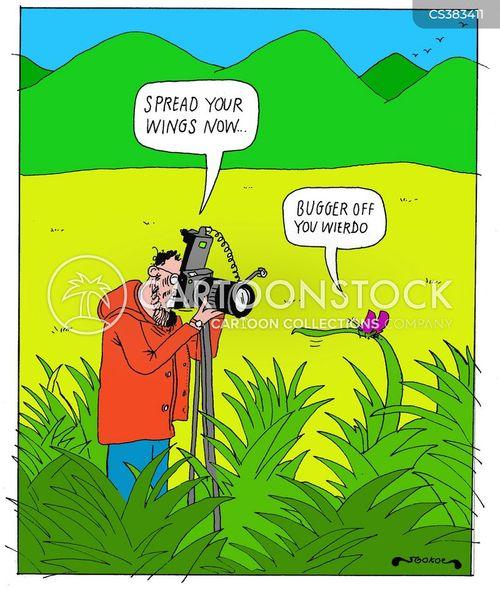 wildlife photographers cartoon