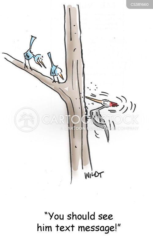 woodpeckers cartoon