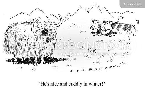 bisons cartoon
