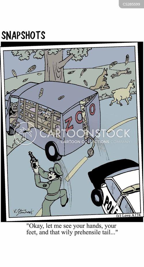 high-speed cartoon