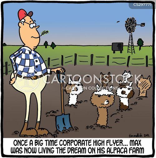 alpacas cartoon