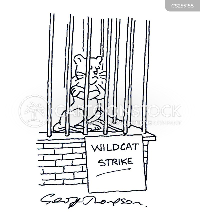 wildcat cartoon