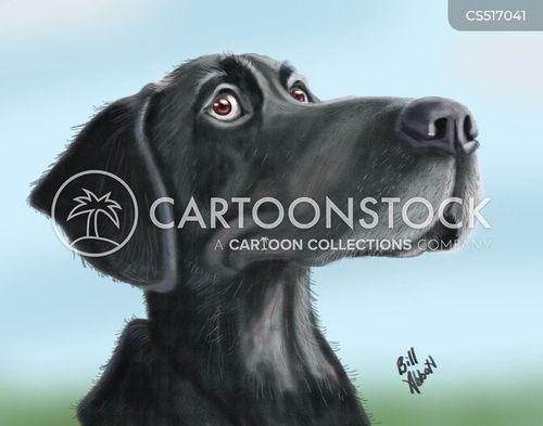 black labrador cartoon