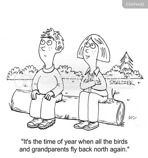 snowbirds cartoon