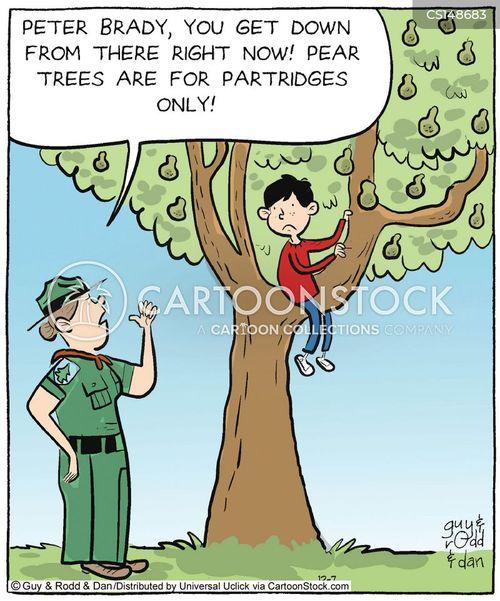 pear trees cartoon