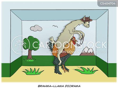 llama riding chook cartoon