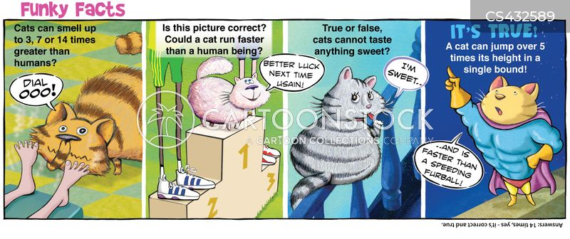 feline facts cartoon