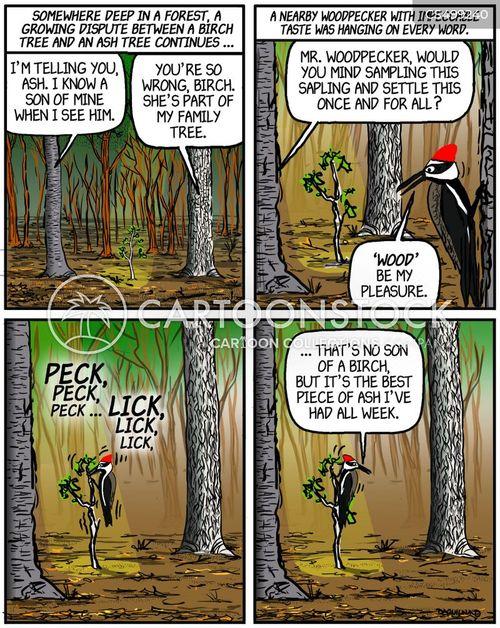sapling cartoon