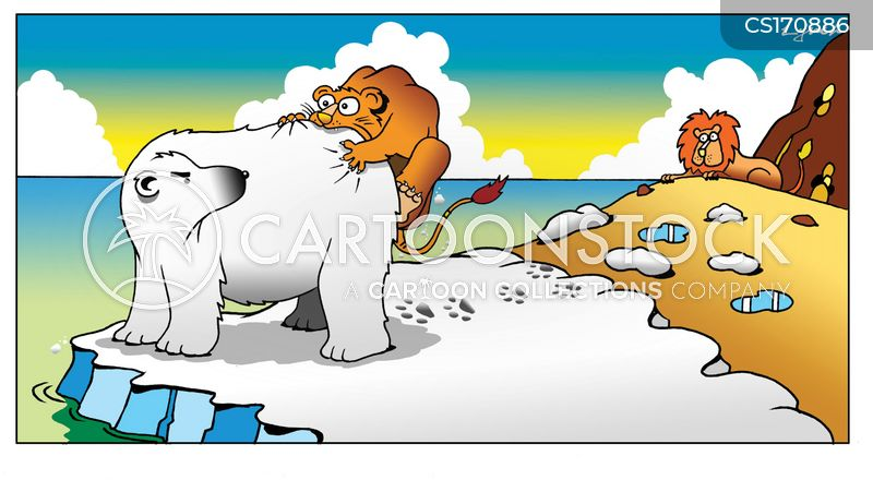 polar bear cartoons and comics funny pictures from