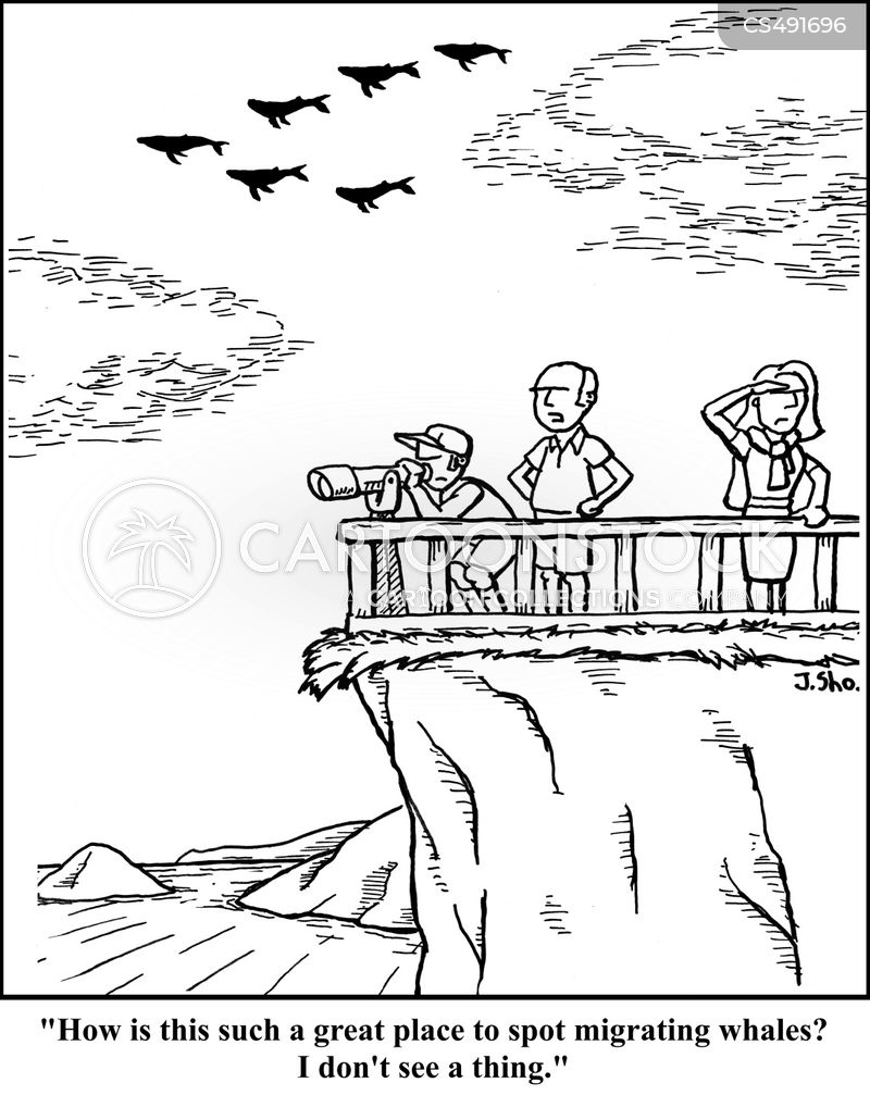 whale watcher cartoon