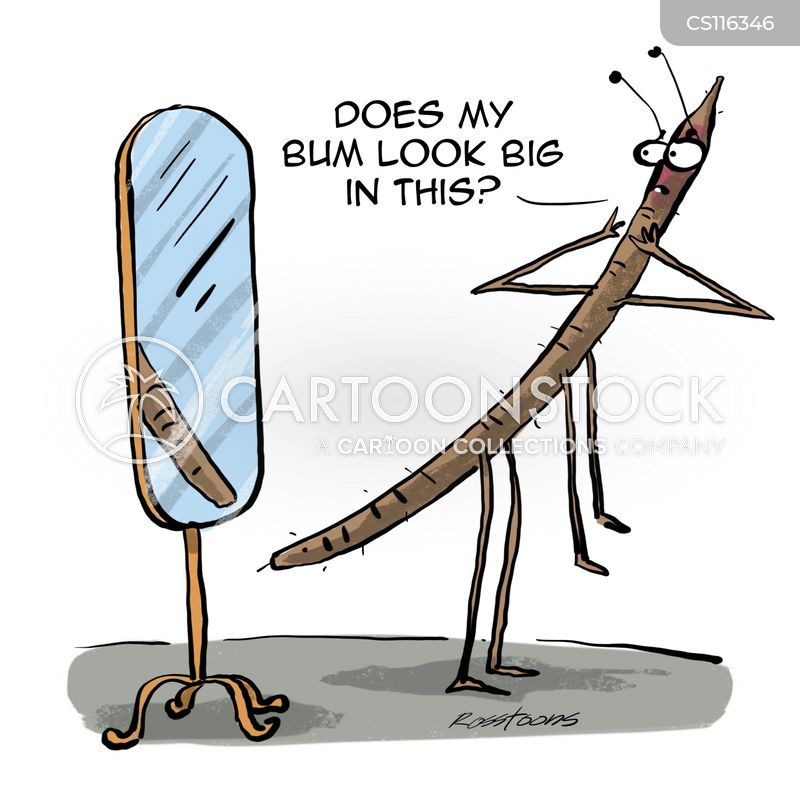 stick insect cartoon