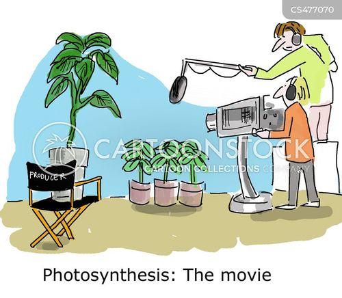 photosynthesis cartoon