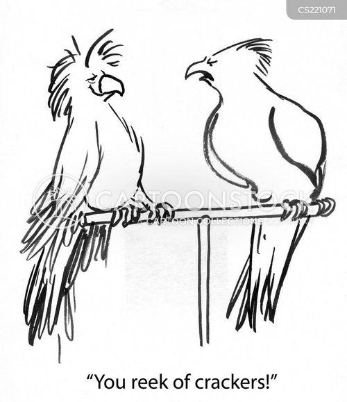 budgerigar cartoon