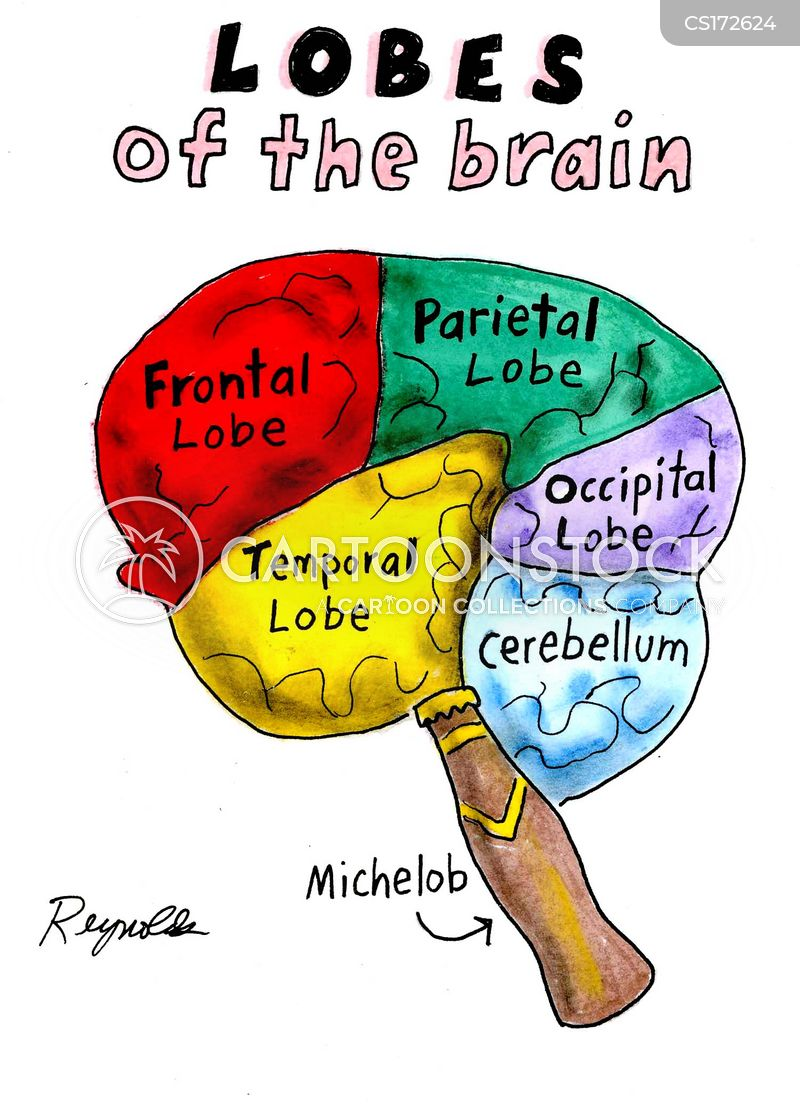 Areas Of The Brain cartoons, Areas Of The Brain cartoon, funny, Areas Of The Brain picture, Areas Of The Brain pictures, Areas Of The Brain image, Areas Of The Brain images, Areas Of The Brain illustration, Areas Of The Brain illustrations