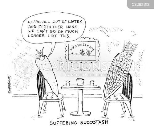 succotash cartoon