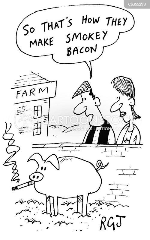 piggy cartoon