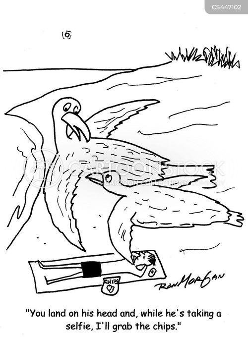 sea gull cartoon