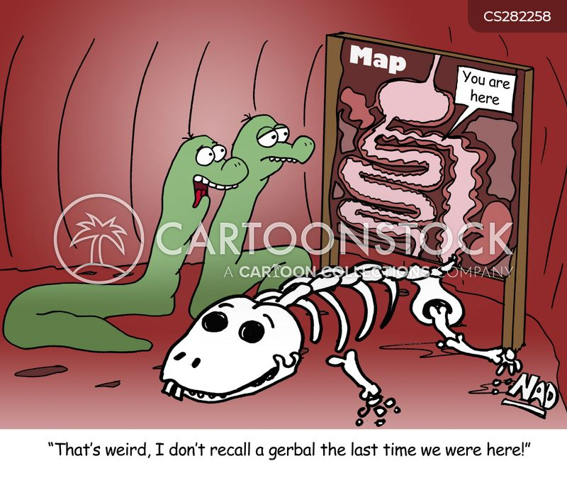 intestine cartoons and comics funny pictures from cartoonstock