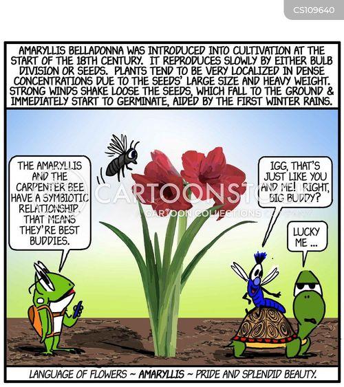 language of flowers cartoon
