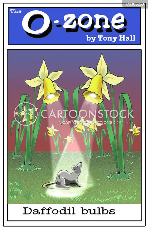 daffodil cartoon