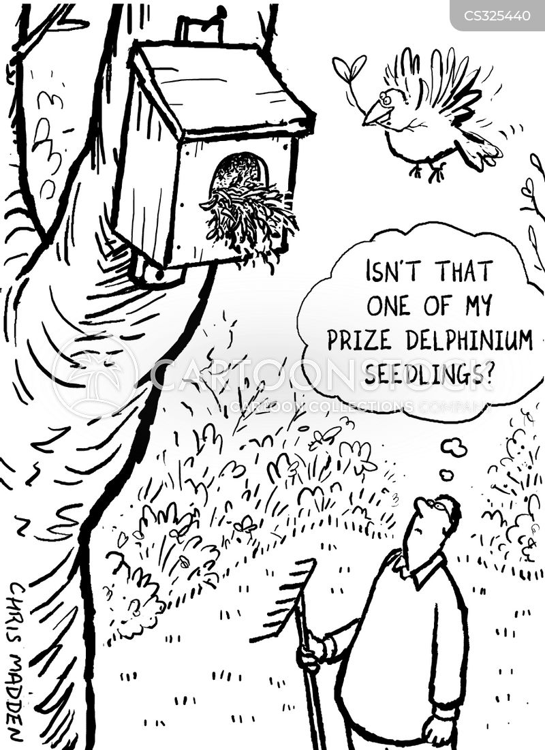 delphinium cartoon