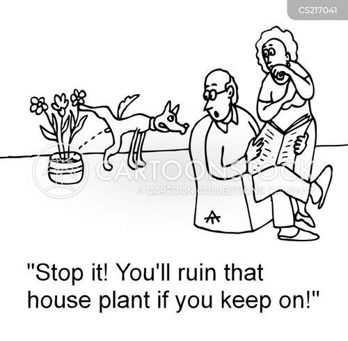 house-plant cartoon