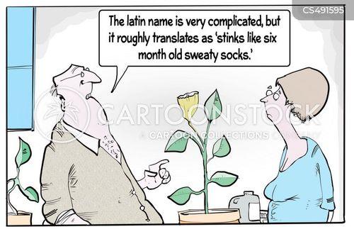latin names cartoon