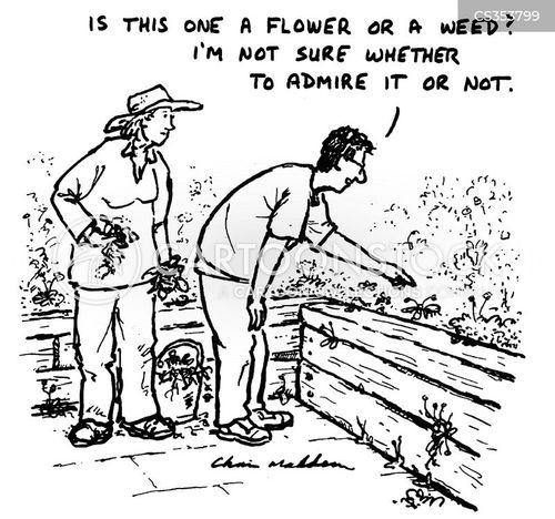 flowering cartoon