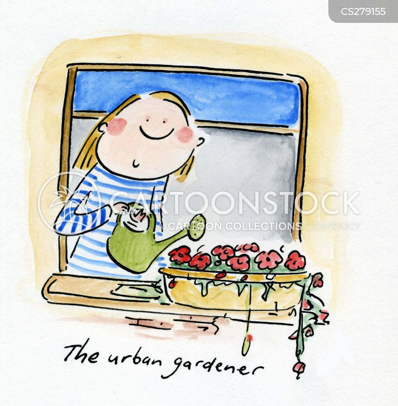 windowbox cartoon