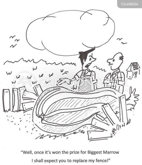 marrows cartoon