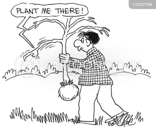 arbor cartoon