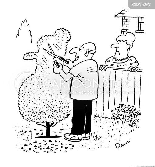 trimming hedge cartoon