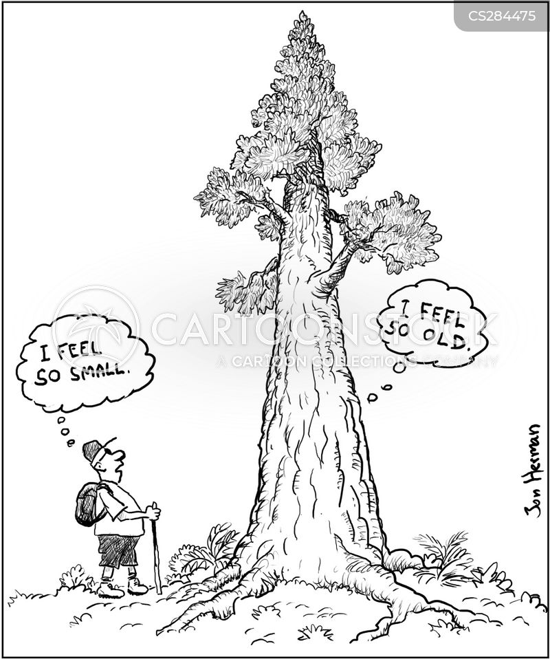 Redwood Cartoons And Comics Funny Pictures From Cartoonstock What makes california so special is the range of sites to see and places to visit. redwood cartoons and comics funny pictures from cartoonstock