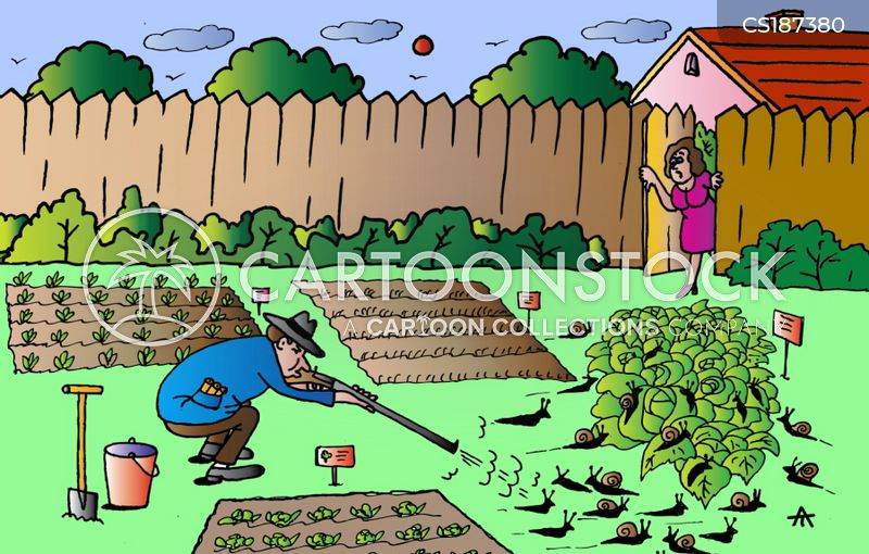 vegetable patch cartoon