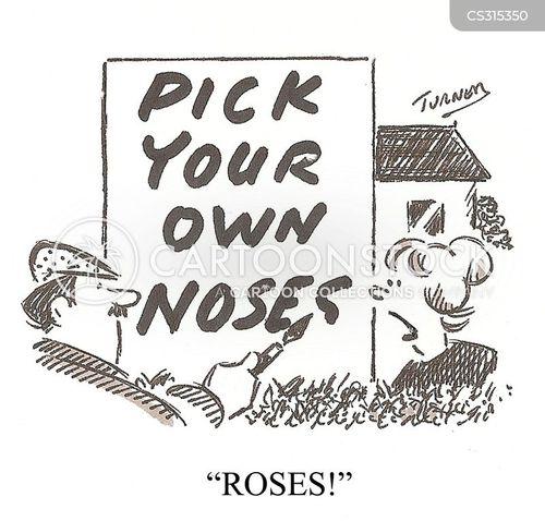 rose garden cartoon