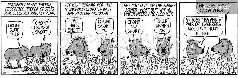peccaries cartoon