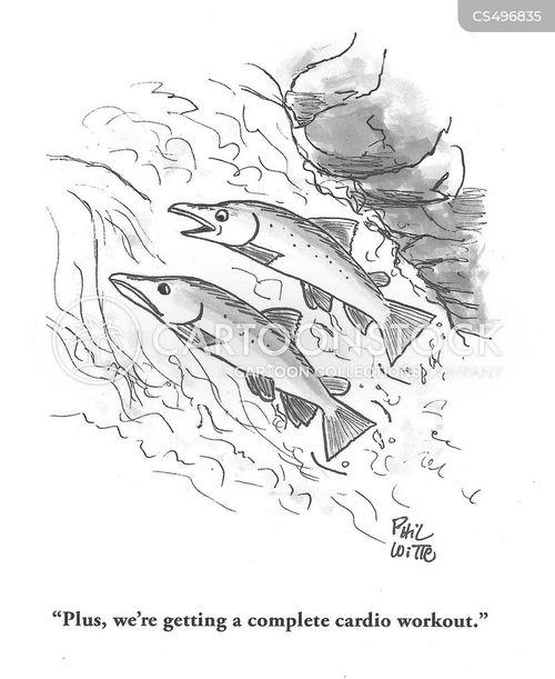 salmon spawns cartoon
