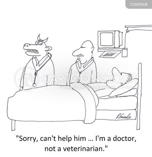bullock cartoon