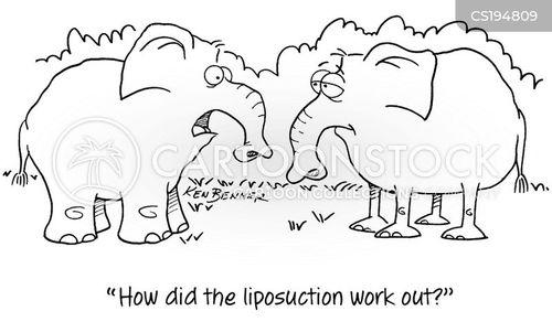 wild-life cartoon