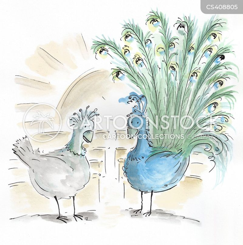 Peafowl cartoons, Peafowl cartoon, funny, Peafowl picture, Peafowl pictures, Peafowl image, Peafowl images, Peafowl illustration, Peafowl illustrations