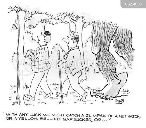 bird spotter cartoon