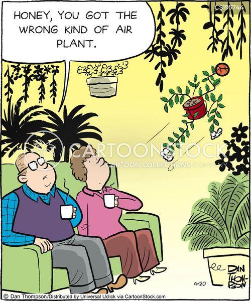 indoor plants cartoon