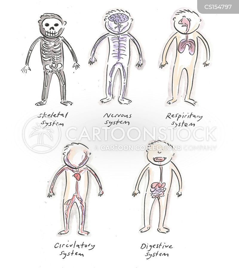 human anatomy cartoon