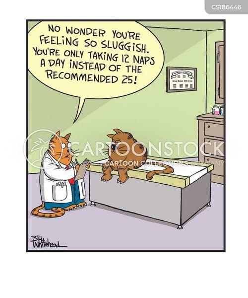 catnaps cartoon