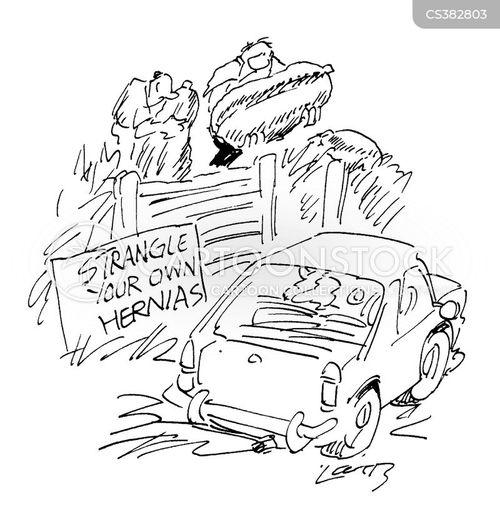 marrow cartoon