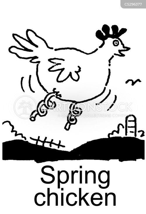 spring chickens cartoon